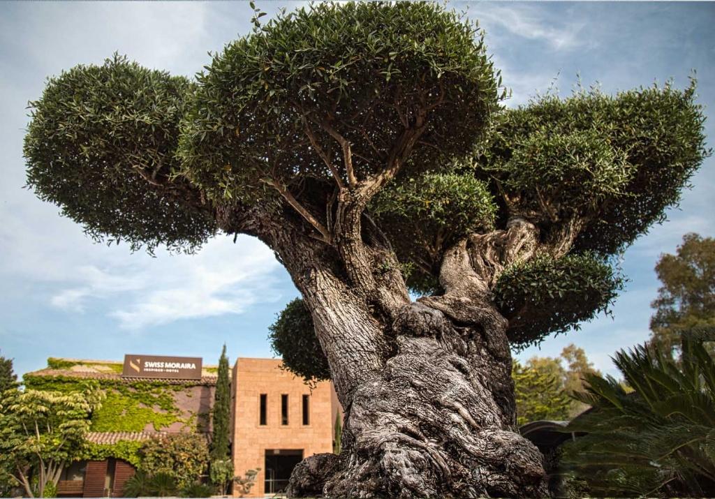 Olive tree Garden Swiss Hotel Moraira